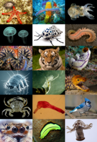250px-Animal diversity.png