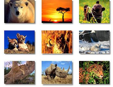 ANIMALES SALVAJES62F0.jpg