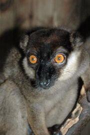 1701121125 lemur collar blanco 3.jpg