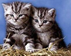 Gatos-fotos.jpg