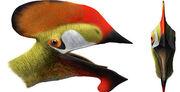 Reptil volador cuenca.jpg
