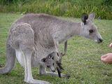 Los 10 animales con mas riesgo de extinción.