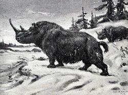 Wooly rhinoceros.jpg