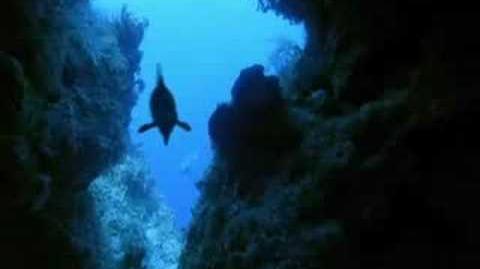Caminando Entre Dinosaurios - Mar Cruel 2 4