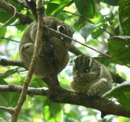 Green-possum 5236