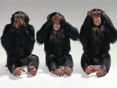 Monos.jpg