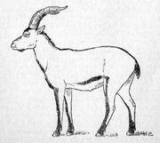 0112080917 cabra montes portuguesa.jpg