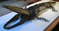 Paracyclotosaurus-davidi.jpg