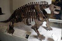 Scutosaurus skeletonjpg.jpg