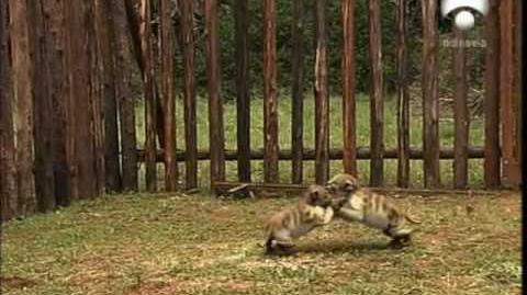 Parque Prehistórico - Capítulo 6 6 - Supercocodrilos 1 5