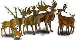 Megaloceros Species (1).jpg