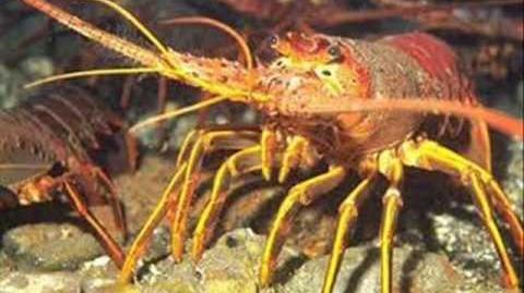 Oriol R.A/Fauna Animal 2