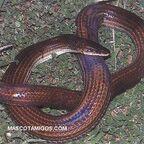 Serpientes1.jpg