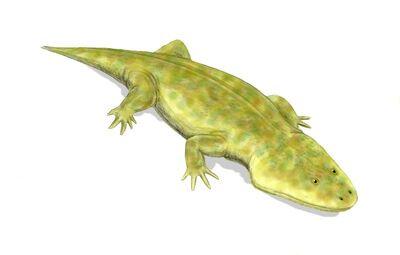 Metoposaurus.jpg