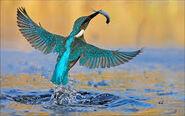 Pájaro0329