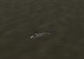 Ka-25-1.png
