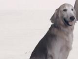 Cossette's dog