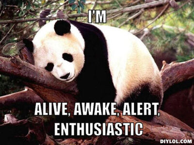Resized procrastination-panda-meme-generator-i-m-alive-awake-alert-enthusiastic-ce3c1e.jpg