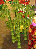 Bamboo stage 4.png