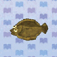 Olive Flounder Animal Crossing New Leaf Wiki Fandom Welcome a little one with a cherishable gift from olive & cocoa that's as sweet and special as they are. olive flounder animal crossing new
