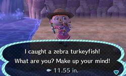 Zebra TurkeyFish.JPG