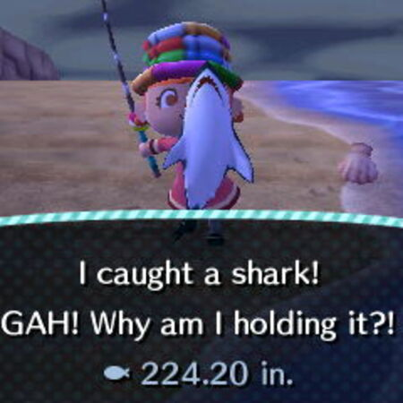 Shark x.JPG