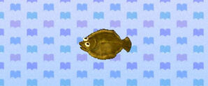 Olive Flounder Animal Crossing New Leaf Wiki Fandom Let's go ahead and dash those now: olive flounder animal crossing new