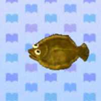 Olive Flounder Animal Crossing New Leaf Wiki Fandom This creature may be sold directly from the inventory, listed in the player's market box, or given to villagers for requests. olive flounder animal crossing new