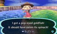 PopEyed GoldFish