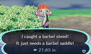 Barbel Steed