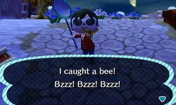 Bee Catch1.JPG