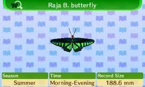 RajaBButterfly.jpg