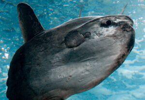 SunfishIRL.jpg