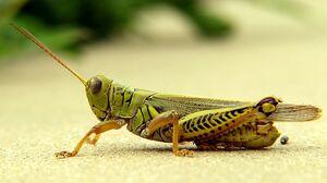 GrasshopperIRL.jpg