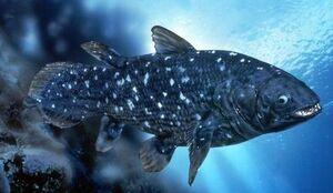 CoelacanthIRL.jpg
