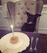Sarah's dog - Annie