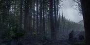 Finite Forest