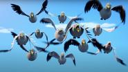 Pigeon Flock
