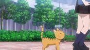 Minori following two students as a cat
