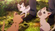 Cats surrounding Washiho's feet