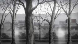 White shadows near the tree's.jpg