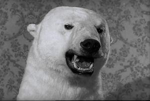 Af bear 2 problem.jpg