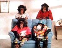 350full-pg-tips-chimps.jpg