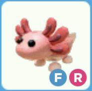 Axolotl inv