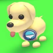 Killer Whale Badge on a Dog
