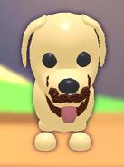 Wool Beard on Dog