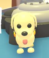 Amber Earrings on a Dog