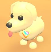 AM Gay Pride Pin on Dog