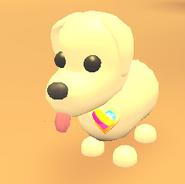 AM Pan Pride Pin on Dog