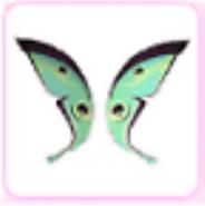 Jade moth wings AM